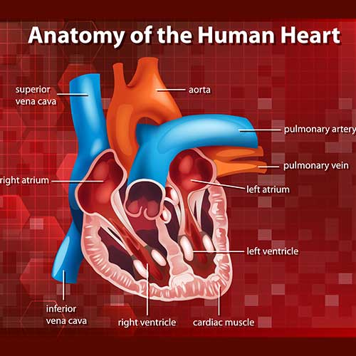 HBOT can improve cardiovascular health